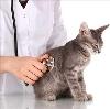 Ветеринарные клиники в Минусинске